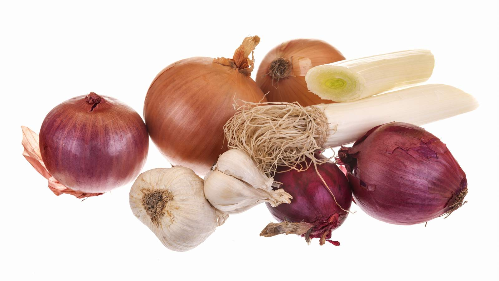 clases y tipos de cebollas