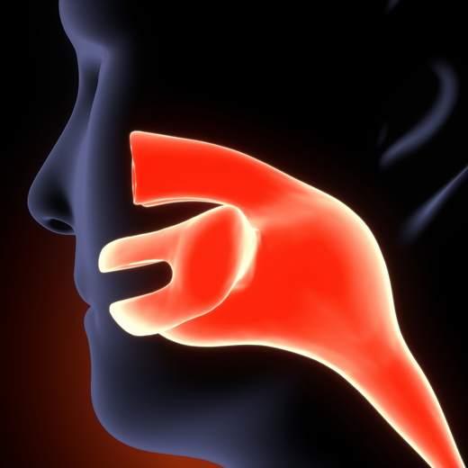 esquema de la boca y faringe